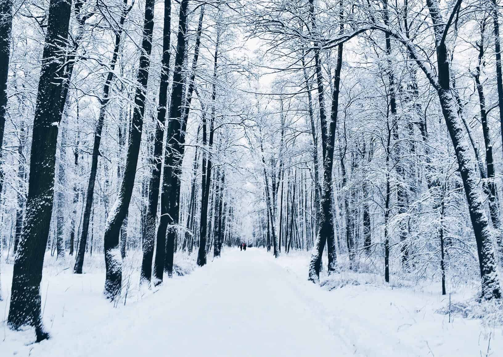 winter-park-tree-forest-forest-snow-snow-russia-trees-snowy-forests_t20_YQbxjW